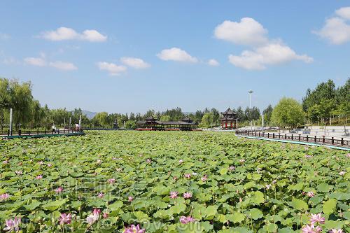 龙源湖景区荷花绽放 —中国喀左— 喀左县人民政府