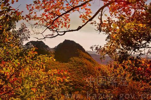 中秋树叶风景贴画